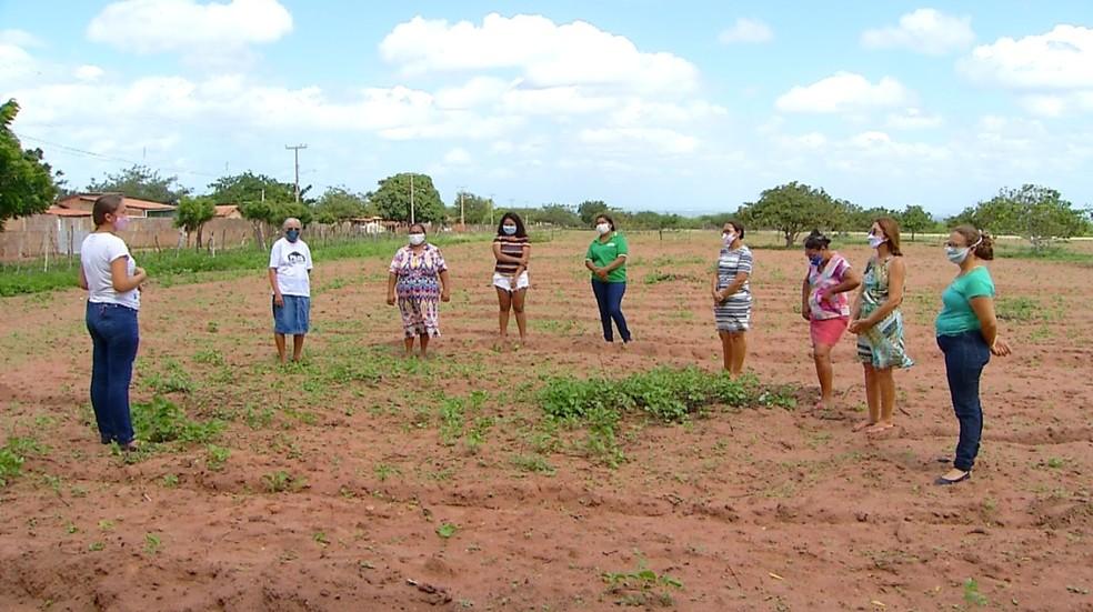 Mulheres fazem plantação em quintal coletivo em Mossoró — Foto: Hugo Andrade/Inter TV Costa Branca