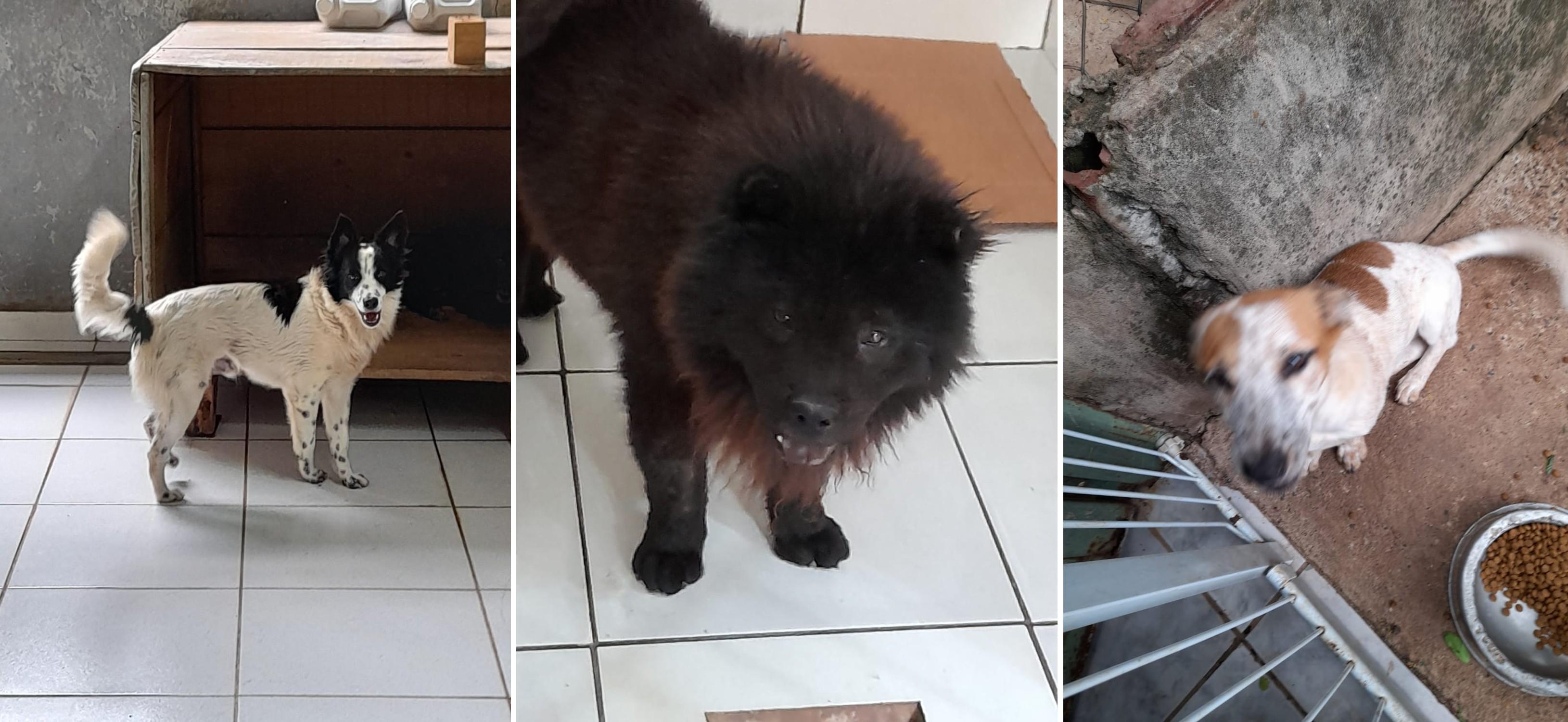 Campanha oferece quase 50 cães e gatos para adoção em Bauru