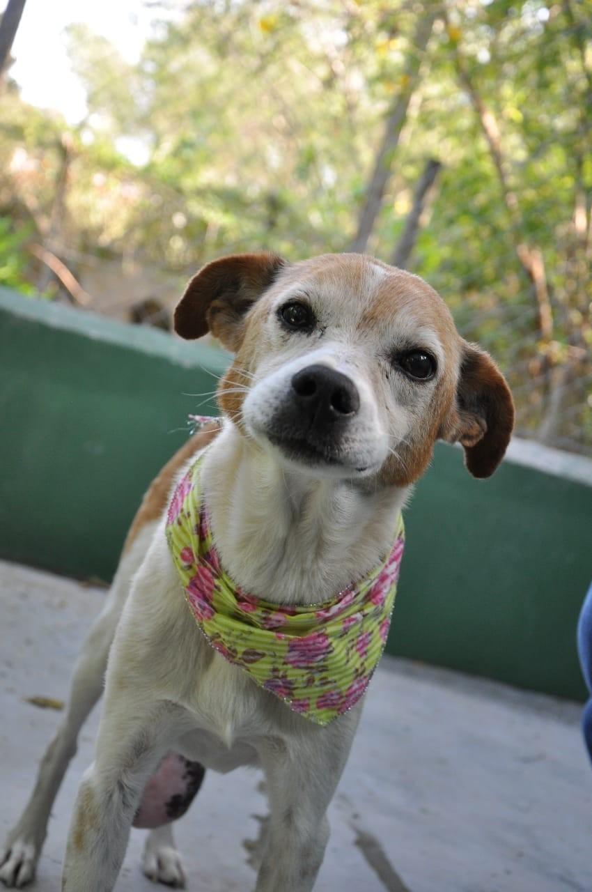 Zoonoses faz campanha de adoção de cães em Votorantim nesta sexta-feira