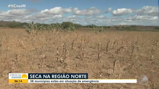 Agricultores do norte baiano sofrem prejuízos provocados pela estiagem prolongada