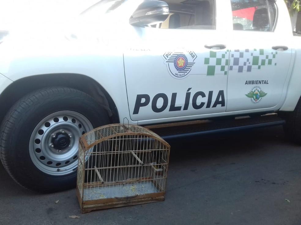 Aves foram apreendidas em cidades do Oeste Paulista  — Foto: Polícia Ambiental