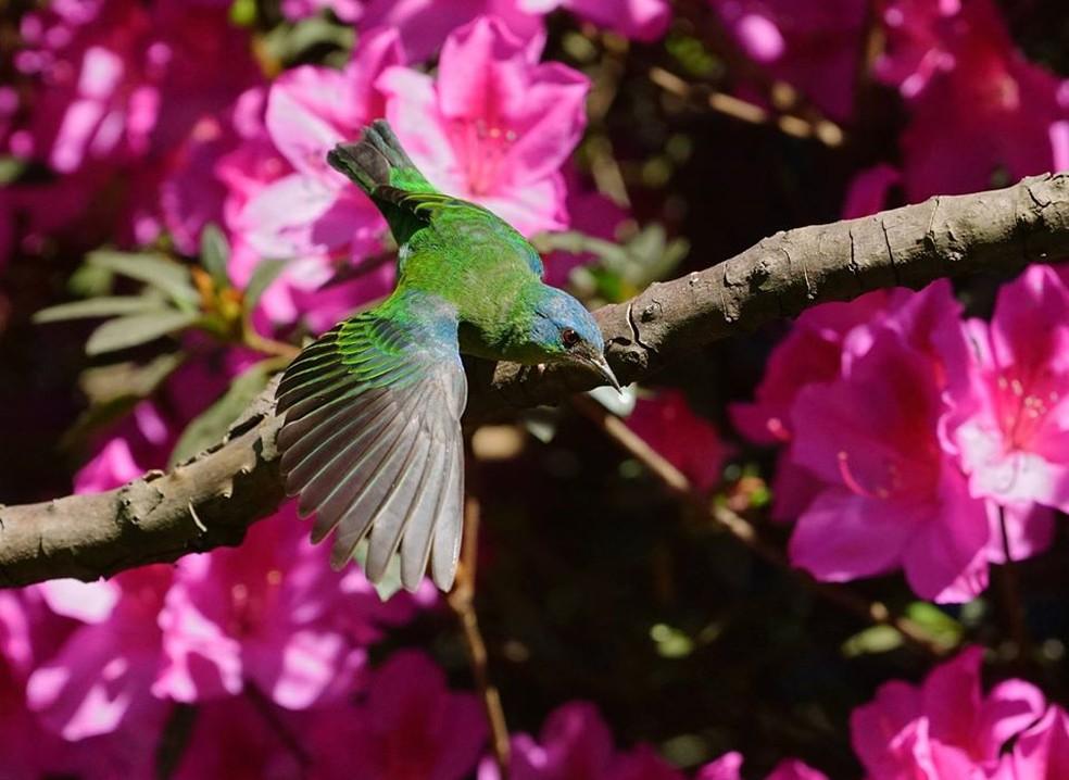 Na natureza tudo se renova a cada instante — Foto: Ananda Porto/ TG