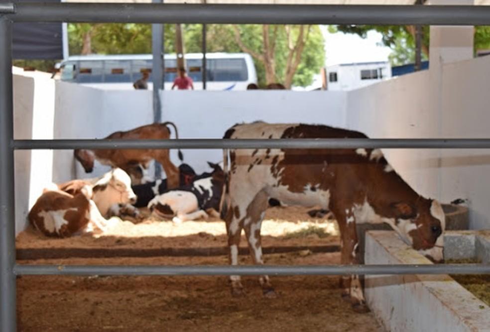 Expoapi reúne criadores e promove negócios no setor agropecuário em Teresina — Foto: Divulgação/CCOM