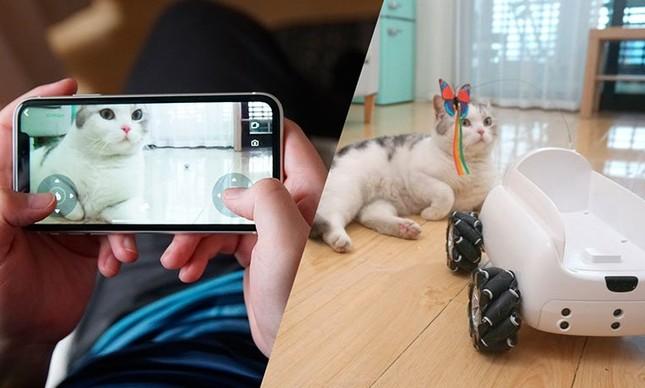 Pumpkii: companheiro robótico para pets