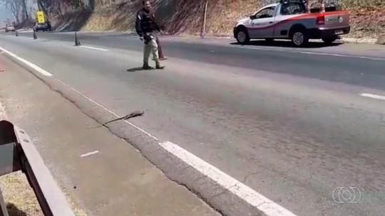 Animais tentam se esconder para fugir de queimadas em Goiás