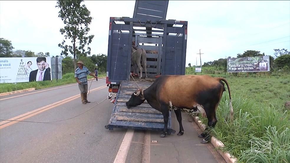 Operação será levada para todas as rodovias federais do Maranhão (Foto: Reprodução/TV Mirante)