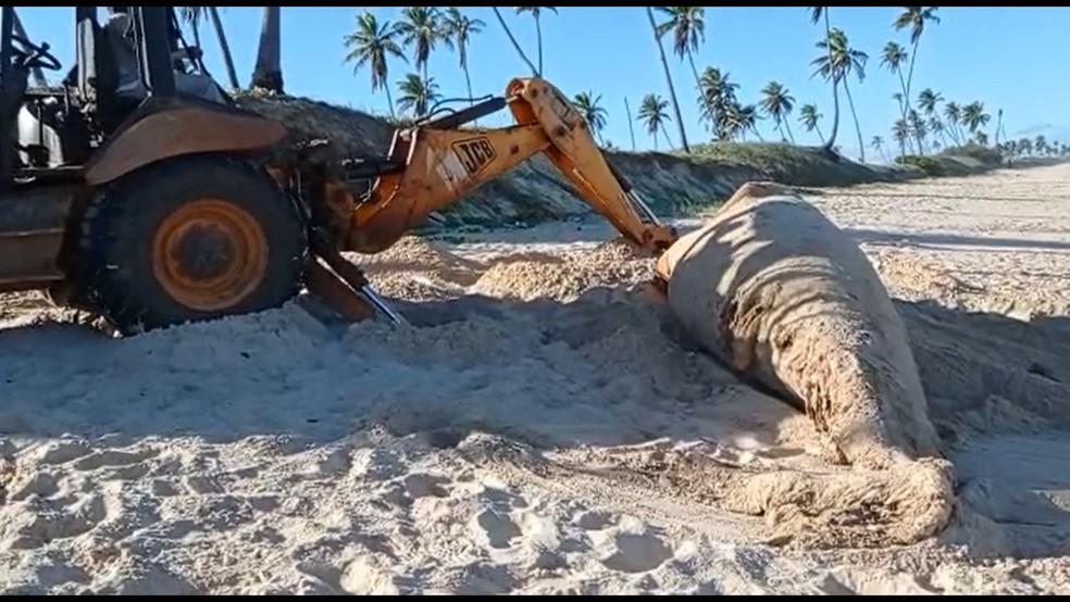 Filhote de baleia jubarte que pesava duas toneladas é encontrado morto em praia de Camaçari — Foto: Defesa Civil de Camaçari