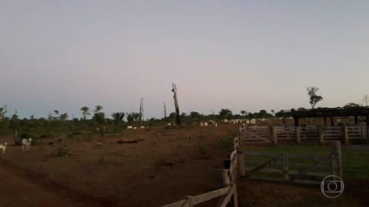 Servidores ambientais denunciam cancelamento de operação para apreensão de gado no Pará