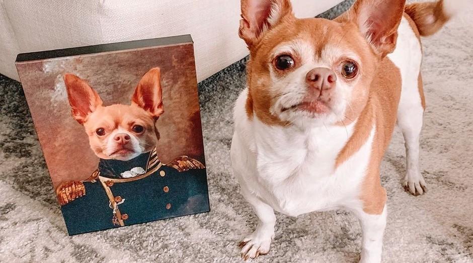 cachorro (Foto: Reprodução: Instagram)