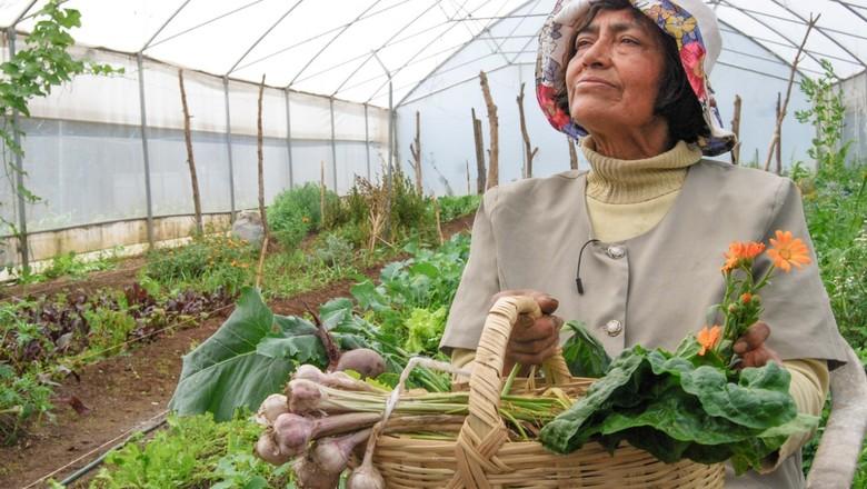 Agricultores familiares (Foto: Secretaria de Agricultura do México/Divulgação)