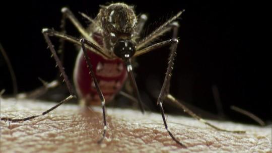 Mosquito Aedes aegypti atormentou a vida dos brasileiros em 2016