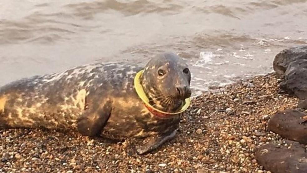 O animal foi abandonado pelas outras focas (Foto: David Vyse)