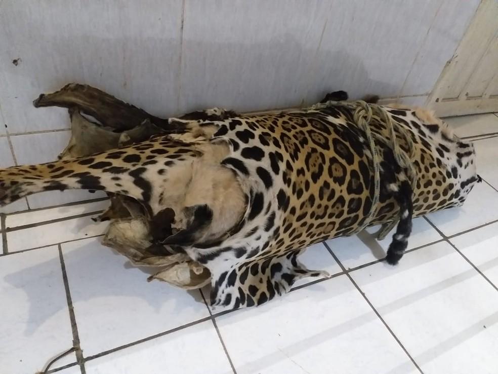 Treza peles e couros de animais silvestres foram encontrados em sítio de Candeias do Jamari.  — Foto: Divulgação/Polícia Civil