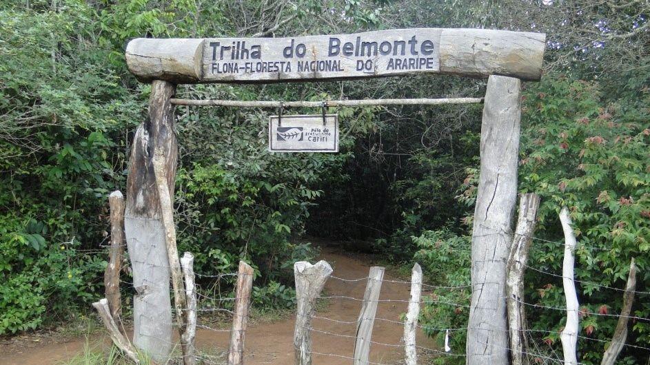 De chá especial a caminhadas, veja o que fazer na floresta nacional do Araripe, a mais antiga do Brasil