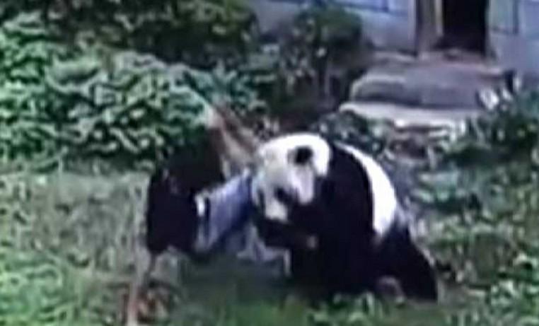 Invasor foi imobilizado por panda ao invadir recinto do animal em zoo chinês (Foto: Reprodução/YouTube/CCTV News)