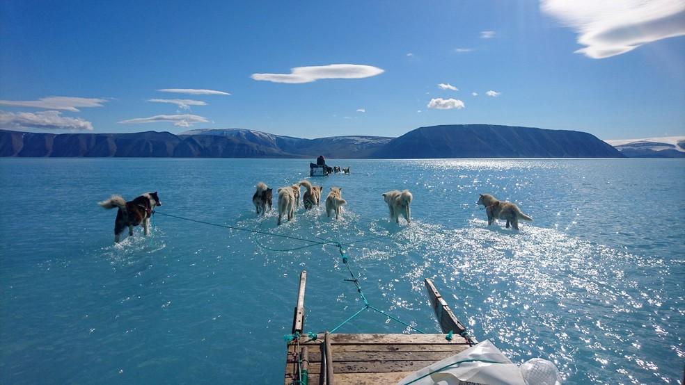 13 de junho de 2019 - Com as patas submersas na água de gelo derretido, cachorros puxam trenó no noroeste da Groenlândia — Foto: Steffen M. Olsen/Centre for Ocean and Ice at the Danish Meteoroligical Institute via AP