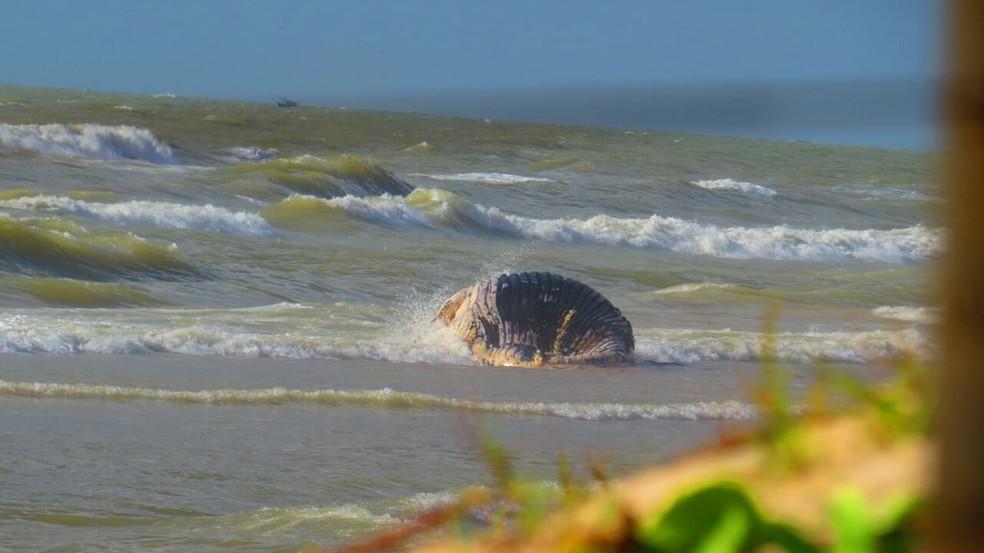 Baleia aparece morta na praia de Guriri (Foto: Divulgação/ Portal São Mateus Sem Censura)