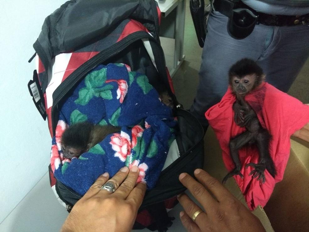 Mulher já foi no ano passado com macacos dentro de mochila — Foto: Divulgação/Polícia