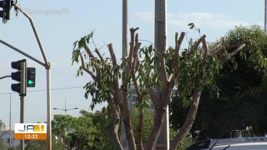 Árvores são podadas de forma irregular em Palmas e moradores reclamam da falta de sombras