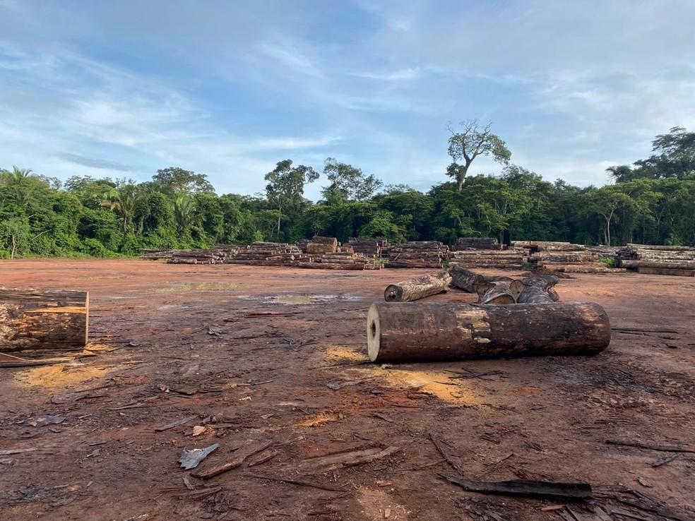 Polícia Federal deflagra operação para combater organização criminosa de extração ilegal de madeira — Foto: Polícia Federal/Divulgação