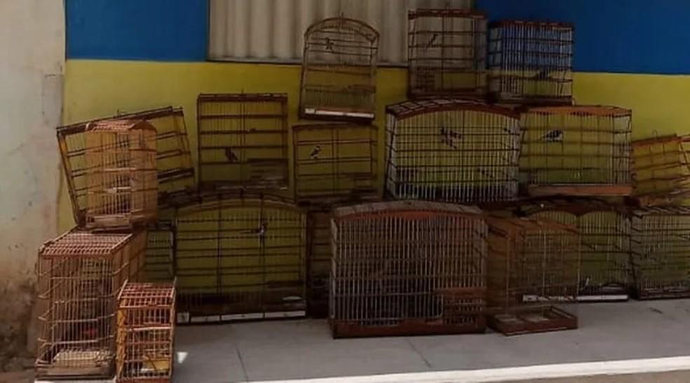 Aves em cativeiro foram resgatadas pela Polícia Militar em Patos, Paraíba — Foto: Polícia Militar Ambiental/Divulgação