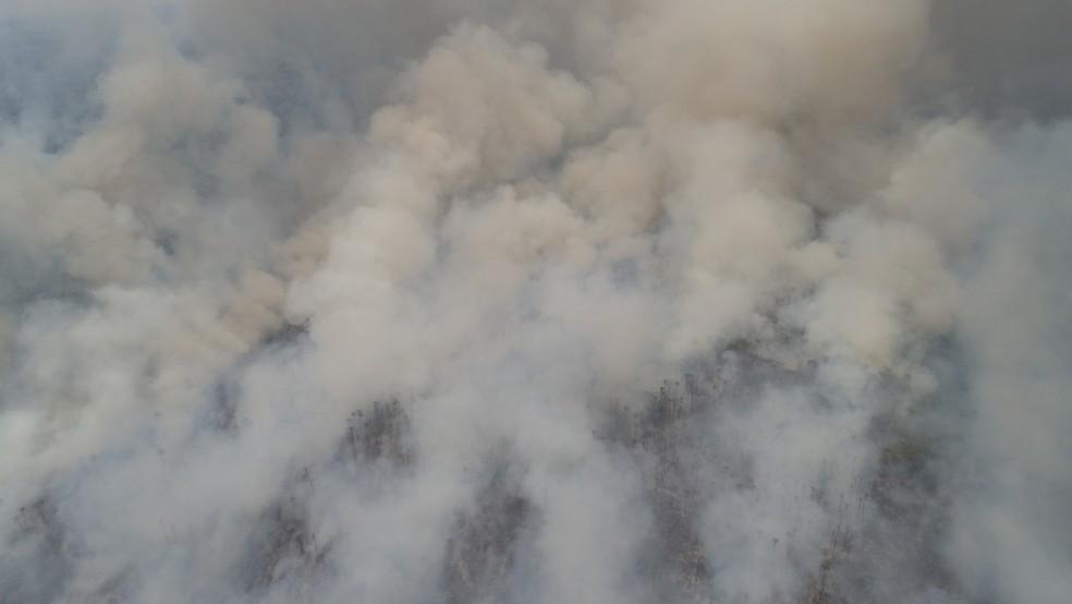 Área queimada próxima a Miranda (MS), no Pantanal — Foto: Chico Gomes/TV Morena