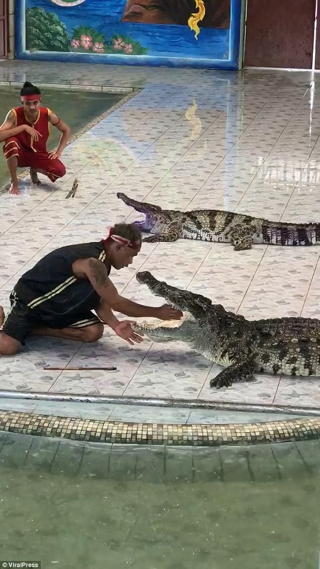 Instrutor mexia na boca do animal antes do ataque (Foto: Reprodução/Youtube)