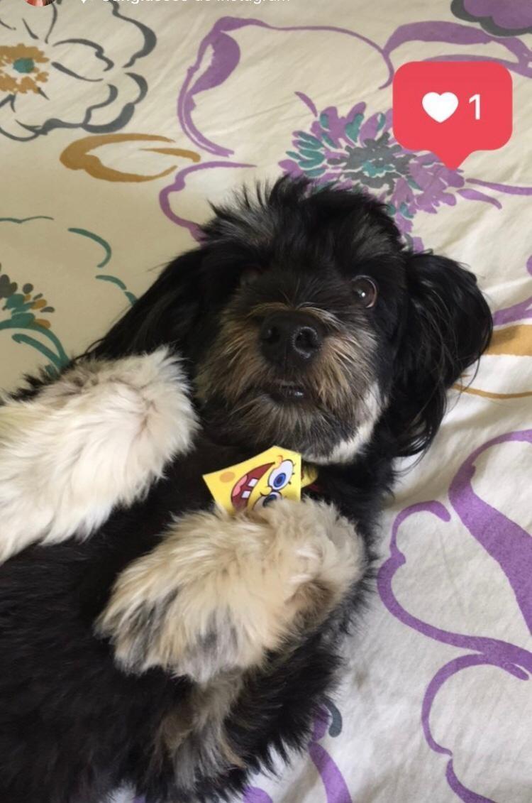 Cachorro levado dentro de carro roubado em assalto é recuperado 11 horas depois, em Teresina