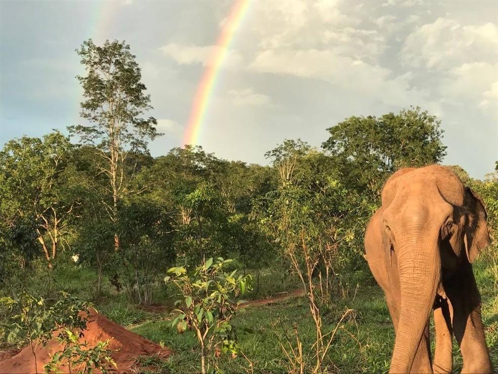 Voluntários vão prestar serviços para ajudar na rotina de preservação dos animais e nos cuidados diretos aos elefantes — Foto: Santuário dos Elefantes/ Divulgação