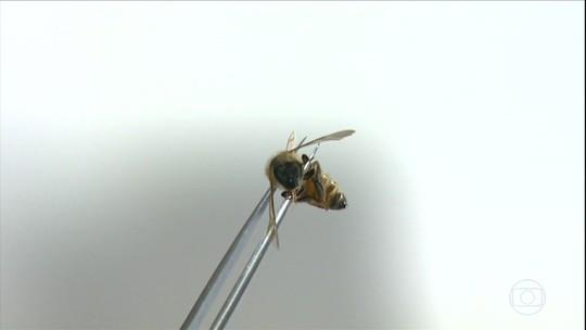 Apicultores de SP enfrentam a morte de milhões de abelhas
