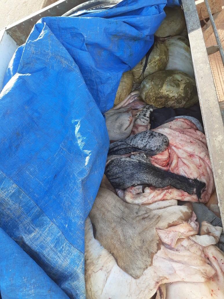 Homem é flagrado transportando 500 quilos de carne imprópria para consumo em RO