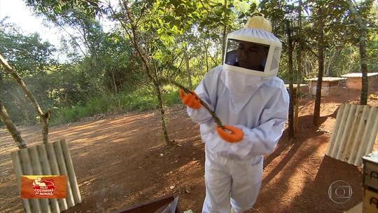 'Pelas Cozinhas de Minas' mostra as abelhas que estão ganhando fama no mercado exterior