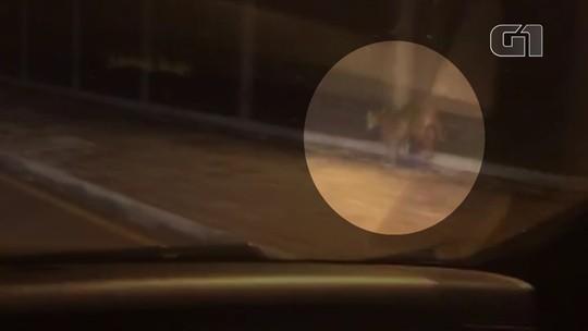 Onça é flagrada correndo ao redor do Parque do Lago, em Campo Mourão; VÍDEO