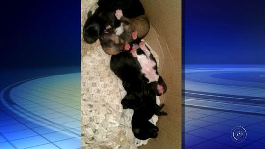 Cadela e seis filhotes são encontrados abandonados em rodovia de Marília