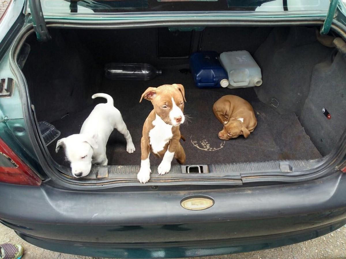 Cães são vendidos dentro de porta-malas em feira no DF; vendedores foram detidos
