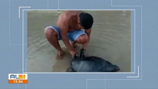Tartaruga coberta por óleo é encontrada no Pontal de Coruripe, AL
