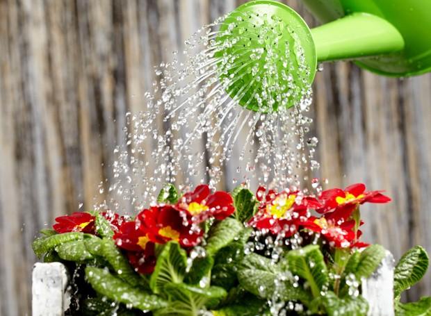 A forma mais econômica de aguar as plantas é usando um regador! (Foto: Thinkstock)