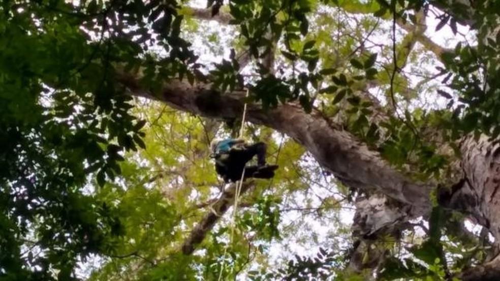 'Crescer em altura é um desafio para as árvores', diz o professor que coordenou expedição para encontrar árvore mais alta da Amazônia — Foto: Divulgação/Jhonathan dos Santos