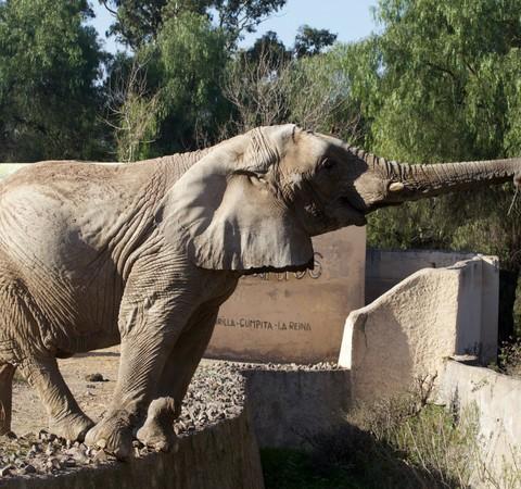 Campanha arrecada fundos para trazer elefante a santuário brasileiro