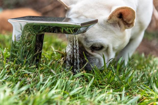 Torneira ativada por movimento de casinha de cachorro feita pelo Studio Schicketanz (Foto: DesignBoom/Studio Schicketanz/Reprodução)