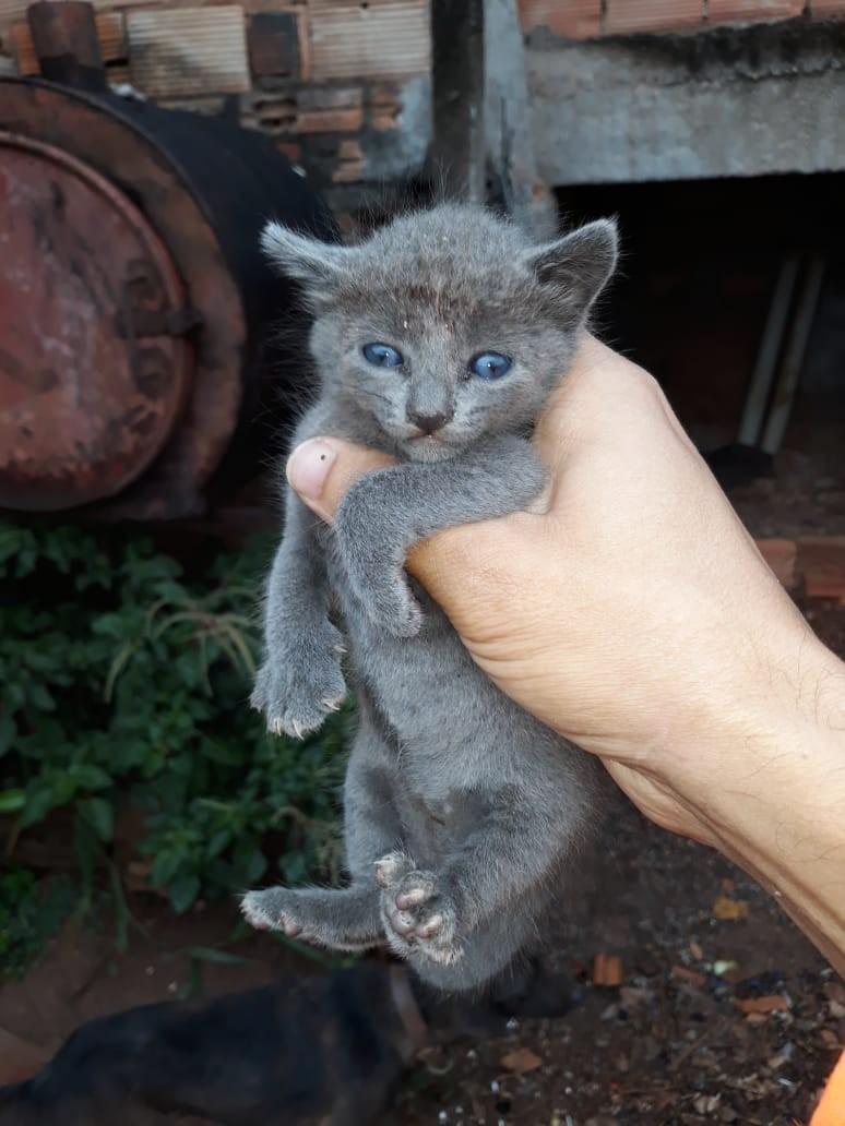 Bombeiros resgatam filhote de gato que ficou preso entre muros em Pará de Minas; veja vídeo