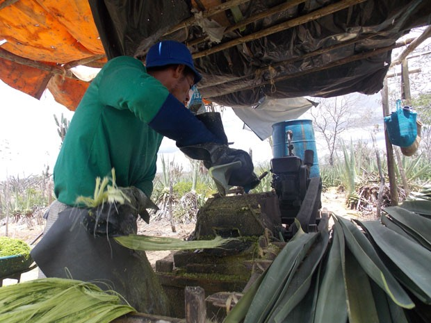 """Máquina """"Paraibana"""" responsável por mutilações na região sisaleira (Foto: Henrique Mendes / G1)"""