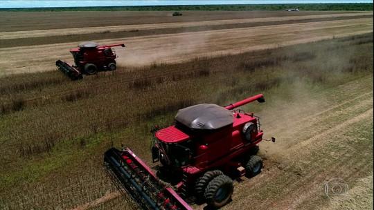 Índios plantam soja no Mato Grosso e levantam polêmica