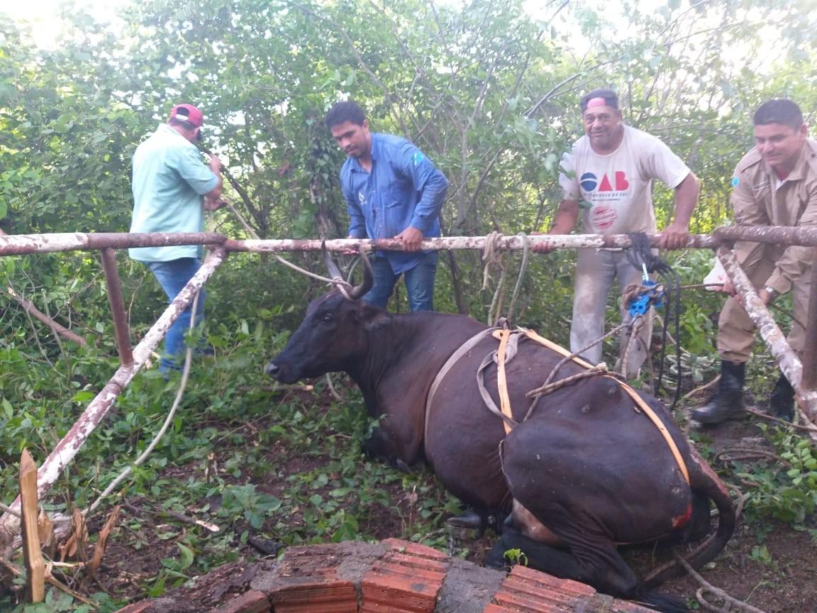 Vaca cai em poço artesiano e é retirada com correntes e cordas em MS