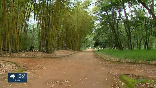 Polícia Civil investiga relação entre estupro e assassinato no bosque de Batatais, SP