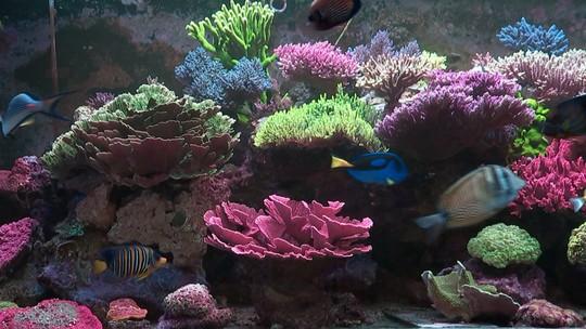 Produtor cria corais marinhos em fazenda no interior paulista