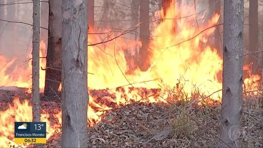 Incêndio destrói 10 hectares de fazenda de eucaliptos em Agudos
