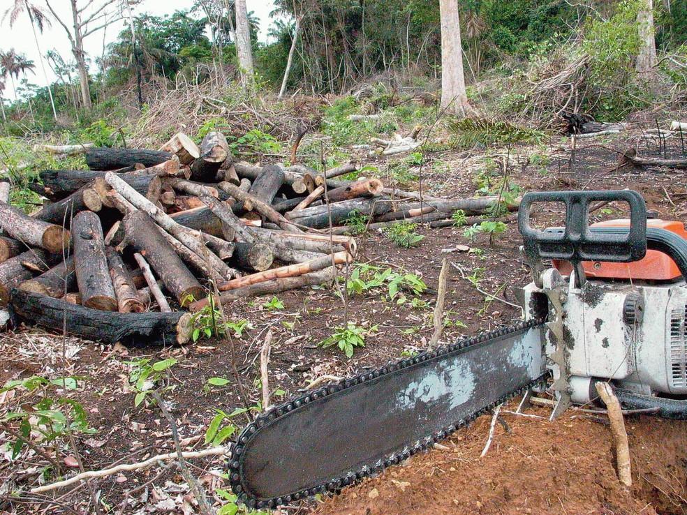 -  Taxa de desmatamento da Amazônia caiu 16% entre agosto de 2016 e julho de 2017  Foto: Agência Brasil