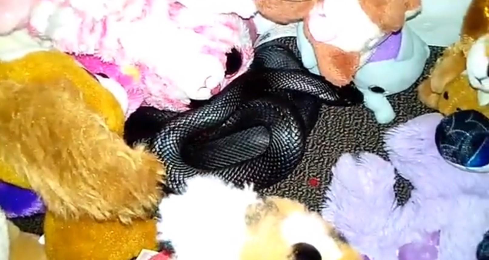 Cobra encontrada no meio dos bichinhos de pelúcia (Foto: Reprodução Facebook)