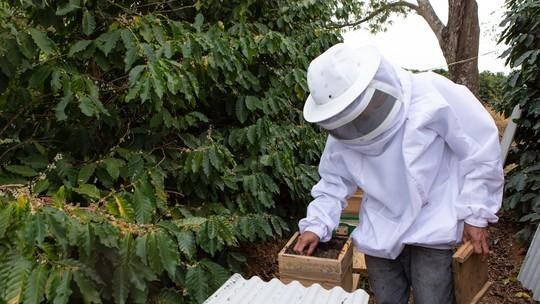 'Uber das abelhas': agricultores recorrem a aluguel de colmeias para melhorar produção de maçã, morango, café e outros grãos